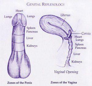 Genital reflexology diagram